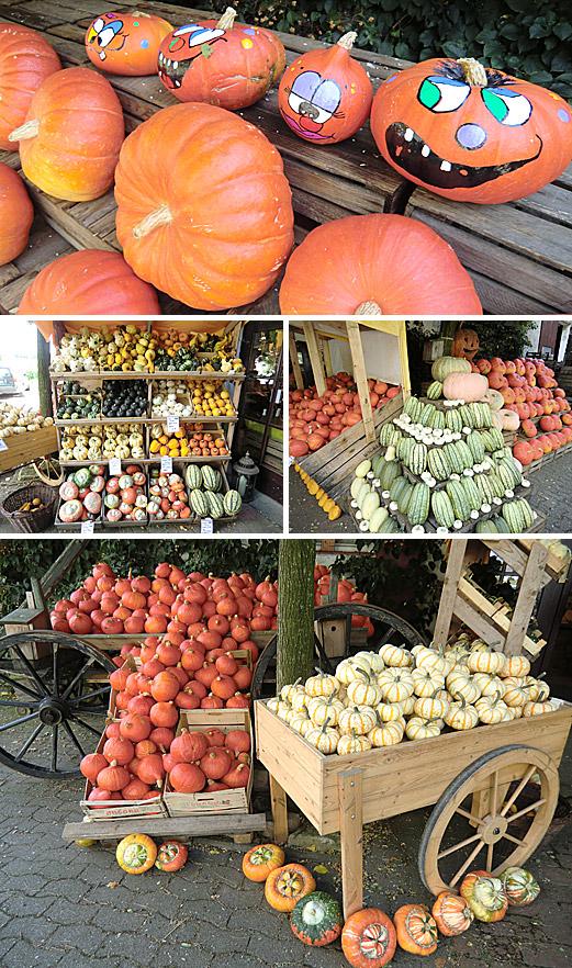 In Frische, köstlichen Aromen und Sortenvielfalt schwelgen - das kann man seit Jahrzehnten auf dem Obsthof Wickemeyer in Bad Holzhausen.