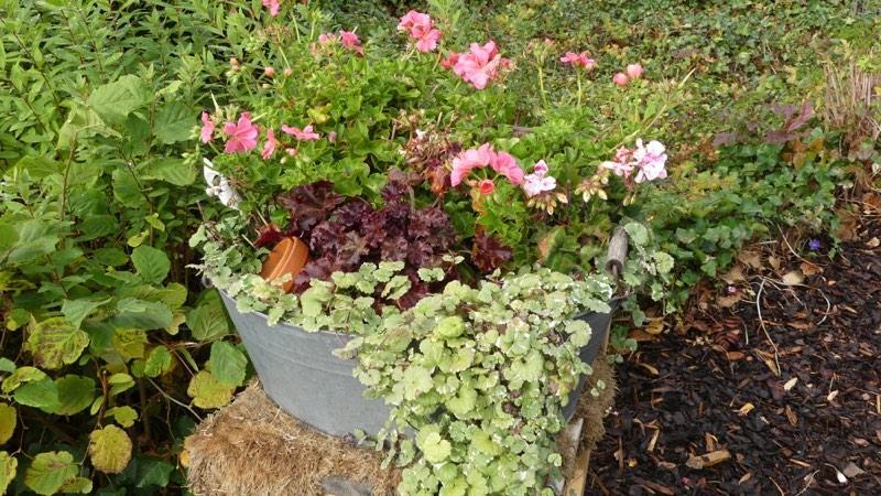 Goldblatt- Florales Raumwerk / Blumen - Eventdekorationen - Dekoverleih