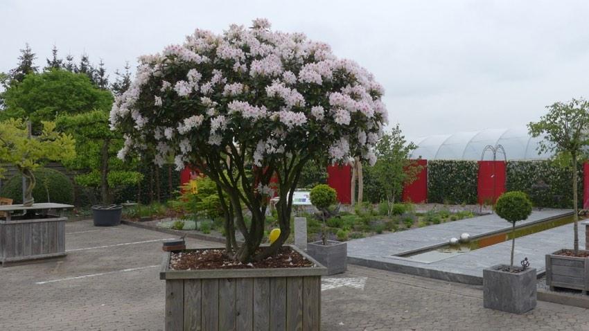Bildergalerie Stein Garten Design E K Garten Und