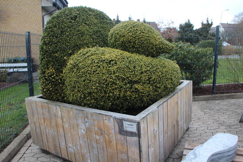 Stein Garten Design ~ Kreative Bilder für zu Hause Design-Inspiration