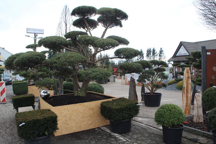 Stein garten design e k hallo luebbecke - Garten und landschaftsbau remscheid ...