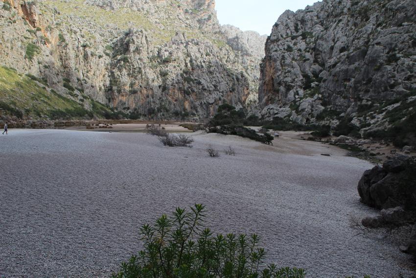 Mandelblüte 2016 auf der Insel Mallorca