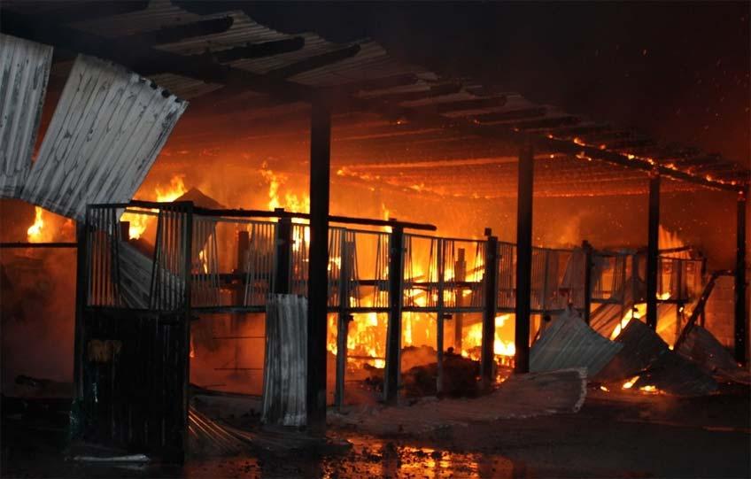 Versuche, die Tiere - darunter eine trächtige Stute - aus dem Flammenmeer zu retten, mussten erfolglos abgebrochen werden.